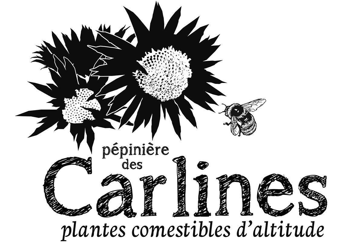 LOGO - carline_NB_1200x800